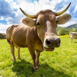 Gospodarstwo – hale dla krów